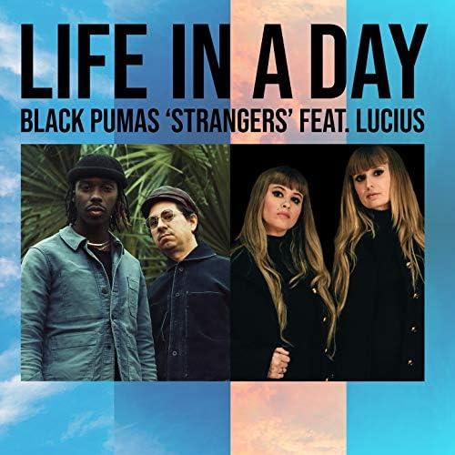 Black Pumas feat. Lucius