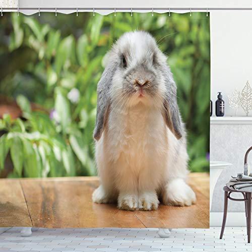 ABAKUHAUS Hase Duschvorhang, Foto von Holland Lop Rabbit, mit 12 Ringe Set Wasserdicht Stielvoll Modern Farbfest & Schimmel Resistent, 175x200 cm, Mehrfarbig