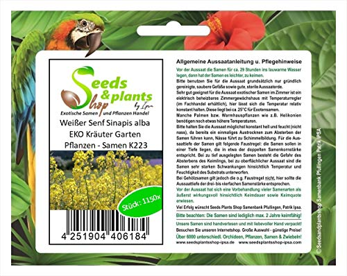 Pezzi - 1000x Senape Bianco Sinapis Alba Semi per Erbe Seme Giardino Semi K223 - Seeds Plants Shop Samenbank Pfullingen Patrik Ipsa