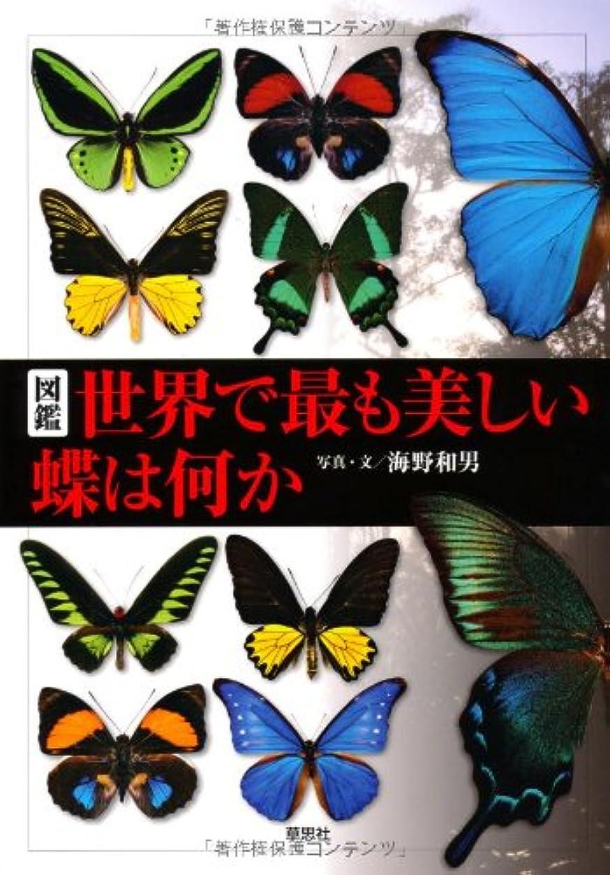 嬉しいですパール相手図鑑 世界で最も美しい蝶は何か