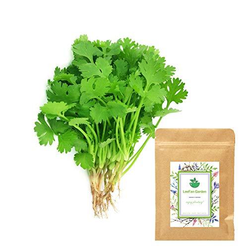 LeeFan Garden, Cilantro (Leisure Coriander) Seeds for Indoor/Garden Planting, 300 Non-GMO Organic Green Vegetable Seeds