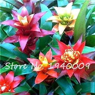 20 pcs/lot Cactus Bromeliad Seeds Rare Colorful Flower Seeds Courtyard Mini Plant Succulent Bonsai DIY Home Garden