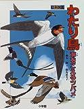 わたり鳥―海をこえるツバメ (絵本図鑑)