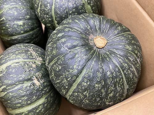 長崎県産 かぼちゃ A等級 M〜Lサイズ 7〜8玉入 10kg(1箱)