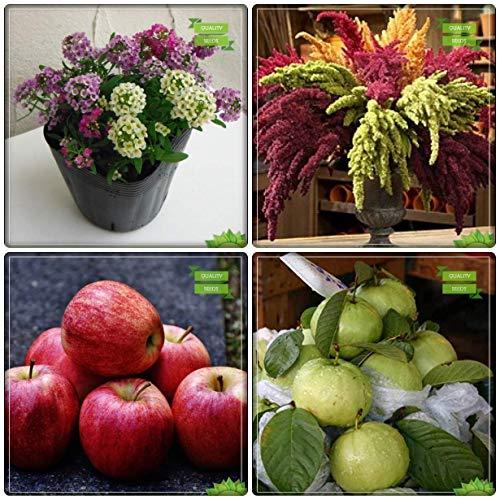 BloomGreen Co. Plantes Graines Combo fruits: Apple, Kilo Pera, Alyssum doux, Amaranthus Dwarf Mix Graines de fleurs pour le jardinage