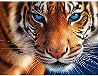 DIY 5Dダイヤモンド絵画キット、大人用クロスステッチキットクリスタル刺繍クロスステッチアートクラフトキャンバス壁の装飾、タイガー (Color : 40x50cm/15.75x19.69inch)