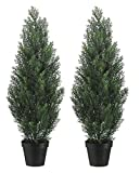 Set Of 2 Pre-potted 3 Foot...