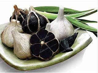 Best black garlic bulbs for planting Reviews