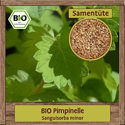 Samenliebe BIO Kräuter Samen Pimpinelle (Sanguisorba minor) | BIO Pimpinellesamen Kräutersamen | Samenfestes BIO Saatgut für 4m²