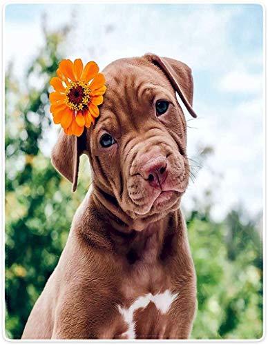 Blankets Warm Soft Cozy Plush Throw 60'x50' Fleece Flannel Blanket Cute Animal Puppy Dog Brown Pitbull