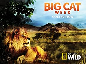 Big Cat Week Collection Season 1