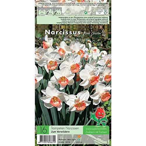 Florado 16x Narzisse Blumenzwiebel 'Pink Charm', Zwiebelblumen, Garten, Blumen Schnittblumen, Bienen Insekten Hummeln, Größe 14/16