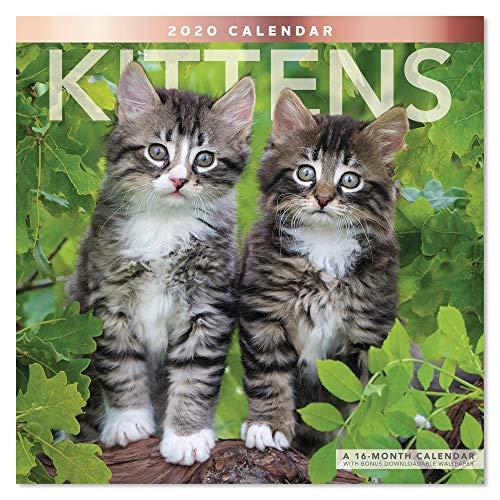 2020 Kittens Wall Calendar (LME1341020)