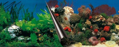 Ebi Pierre&Corail Poster Fond de Aquarium pour Aquariophilie 60 x 30 cm