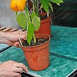Tech-Garden - Materassino capillare di Alta qualità per vassoi di Semi di Grado Commercia...
