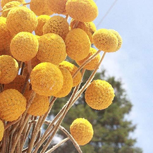 Tamaño grande: la cabeza de la flor es de 2,5 a 4 cm de diámetro. Cantidad: 40 unidades. Tamaño: 40 cm. Secado 100% natural durante mucho tiempo. Ideal para: decoración general del hogar y de negocios, recepciones de bodas y ramos de novia. Es un bue...