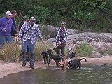 Mikael Tham: Black Bear Hunting With Plott Hounds