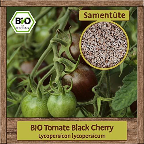 BIO Tomate Samen Sorte Black Cherry (Lycopersicon lycopersicum) Gemüsesamen Tomate Saatgut