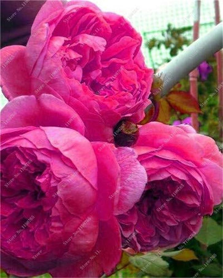 協力的素晴らしいですもシード - 2018 New!盆栽10個/ロット盆栽カラフルな牡丹家の木の植物ハーディ多年草ライトフラワー盆栽ホーム鉢植え:o