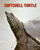 Softshell Turtle: Fun Facts & Cool Pictures
