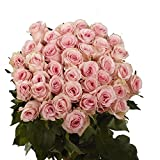 Pink Roses- 50 Fresh Flowers - Express Delivery by Wednesday January 6