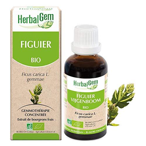 Herbalgem - Gemmothérapie Figuier BIO (Ficus Carica Gemmae) 50 Ml