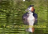 Faszination Haubentaucher (Wandkalender 2022 DIN A3 quer)