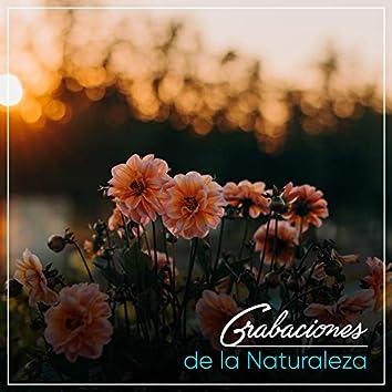 Grabaciones Relajantes de la Naturaleza Soñolienta