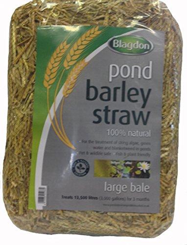 Blagdon 1054669 Paille d'Orge d'Etang Large Bale