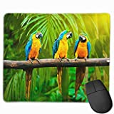 ManSanTuBaZhu Yellow and Blue Macaw Parrot Non-Skid Personalized Designs Gaming Mouse Pad Black Cloth Rectangle Mousepad Art Natural Rubber Mouse Mat with Stitched Edges 9.811.8 Inch