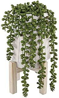 Best donkey tail flower Reviews