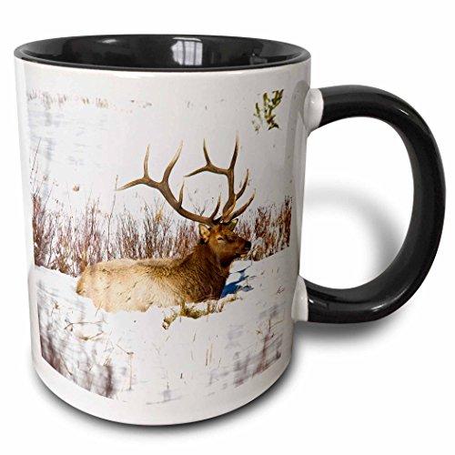 3dRose Usa Colorado Bull Elk Resting In Snow Two Tone Mug, 11 oz, Black,mug_191536_4