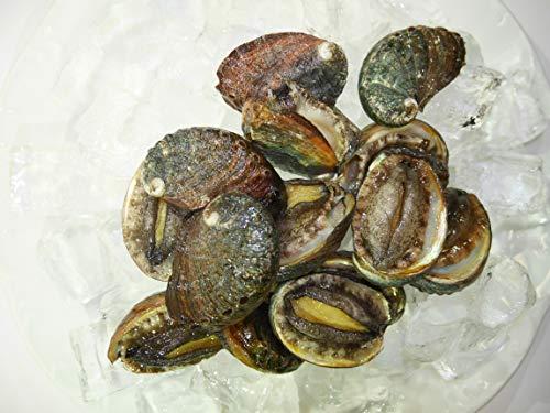 Kona Abalone Fresh Ezo Abalone bite size 14/24pc (0.5lb)