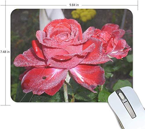 Red Dew Pflanze Blume Blütenblatt Rose Rectangle Mauspad Anti-Rutsch-Gummi-Gaming Mouse Pad 7.9x9.5 Zoll