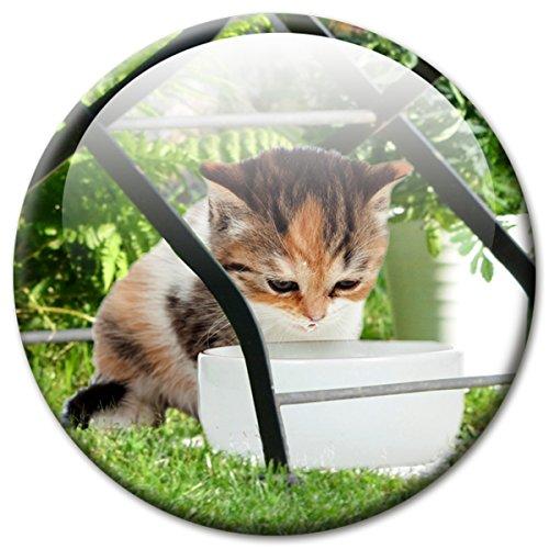 Koelkastmagneet kat met grappig kattenmotief