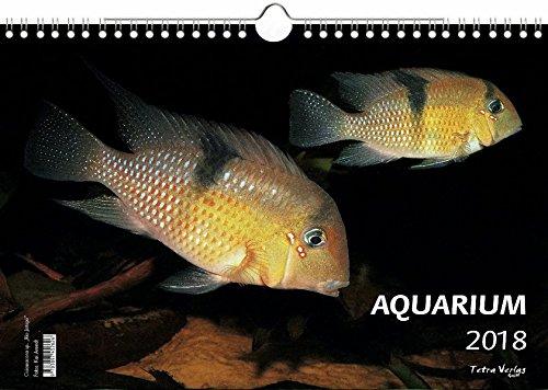 Kalender Aquarium 2018 - Großformat 29,7 x 42 cm (A3) - 12 Fotografien von faszinierenden Aquarienbewohnern - 1 Titelbild mit edlem separatem Folienblatt