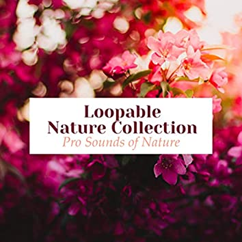 Loopable Nature Collection