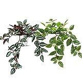 SOGUYI Plantas Artificiales Decorativas 25cm Decoración de Plantas Artificiales de Plástico Muy Realista , Adecuada para la Decoración Moderna de la Oficina de la Sala de Estar del Hogar(2 Stück)