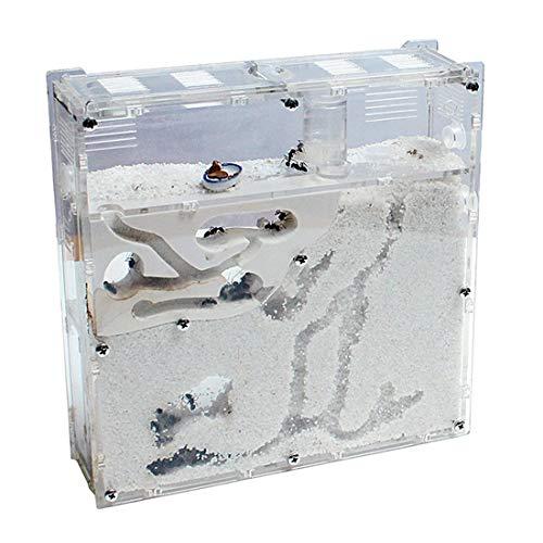 Yiteng アリ飼育キット 砂巣 爬虫類飼育ケース アリの巣観察キット 蟻用飼育ケース アリ飼育セット(砂は別売り)