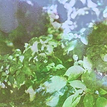 OLIVE#26