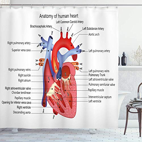 Judascepeda Educational Shower Curtain, Medical Structure of The Hearts Human Body Anatomy Organ Veins Cardiology, Cloth Fabric Bathroom Decor Set with, Coral Red with 12 plastic hooks 180x210cm
