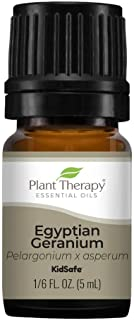 Plant Therapy Egyptian Geranium Essential Oil 100% Pure, Undiluted, Natural Aromatherapy, Therapeutic Grade 5 mL (1/6 oz)