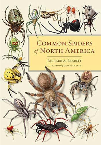 Compare Textbook Prices for Common Spiders of North America First Edition ISBN 9780520315310 by Bradley, Richard A.,Buchanan, Steve