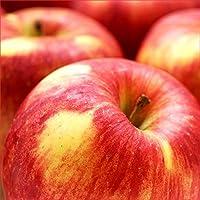 山形県産 葉とらず りんご 5kg (秀品/14玉-20玉入り)
