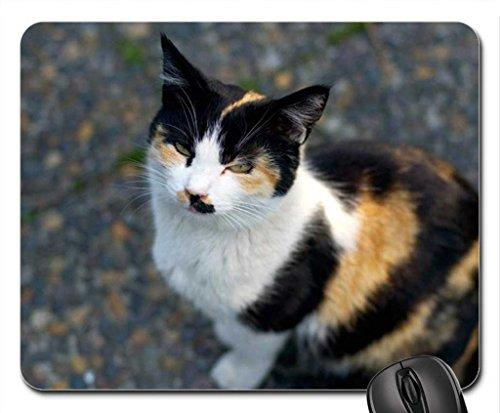 Écailles Cat Mouse Pad, Tapis de Souris (Cats Mouse Pad)