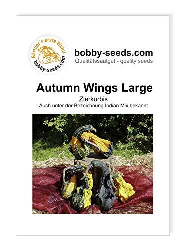 Autumn Wing L Zierkürbis von Bobby-Seeds Portion