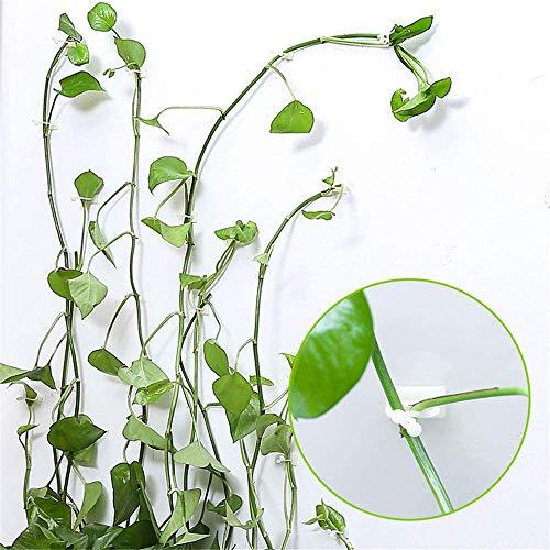 HXHON 50 Stück unsichtbare Wand-Rankenhalterungen Wandkleberhaken Reben Befestigungsclip Rankenhalter Pflanze Kletterwand Clip Wand Klebe Haken Halter Pflanze Stent Support (M)
