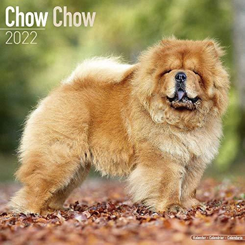 Chow Chow 2022 - 16-Monatskalender: Original Avonside-Kalender [Mehrsprachig] [Kalender] (Wall-Kalender)