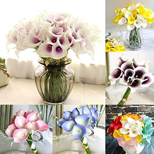 LIANA IRWIN 2 Calla Blumensamen Blumenzwiebeln für Garten Balkon