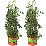 Hydrofarm GCTB Tomato Barrel Pot Planting System with 4 Foot Trellis Tower for Indoor and Outdoor Gardens (2 Pack)